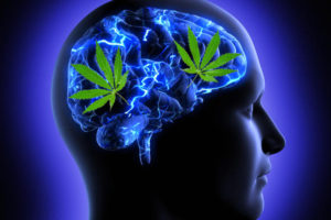 Could Marijuana Use Be A Key Factor In Alzheimer's Disease?