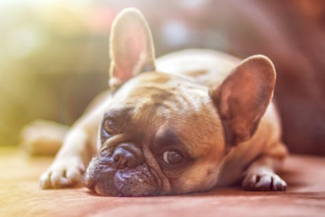 Study Finds This Music Makes Dogs Happiest