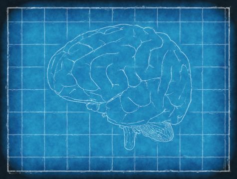 Study: Brain Size Dictates Anxiety, Negativity Levels In People
