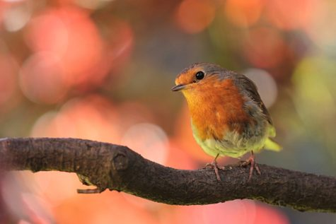 The Birds & The Trees: Doses Of Nature Relieve Stress, Anxiety, Study Finds