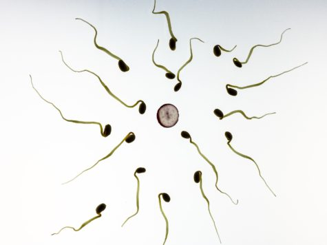 Better Diet Makes For Better Sperm, Greater Fertility: Study