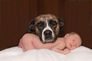Dog with sleeping baby