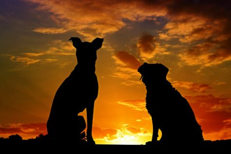 Dogs in the sunset