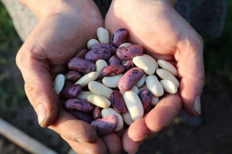 Person holding handful of beans