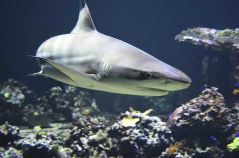 Do Sharks Hold The Secret To Living Hundreds Of Years?