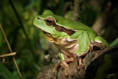 Study: Frogs Have Night Vision Super Power, Can See Color In Pitch Black