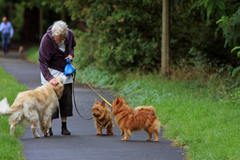 Pick Up The Leash: Study Finds Seniors Who Own Dogs Lead Healthier, More Active Lives