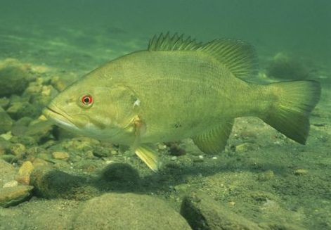 Study: Underwater Noise Pollution Causes Confusion, Stress For Fish