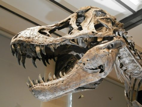 Study: T-Rex Jaws Could Crush Prey With 8,000 Pounds Of Force