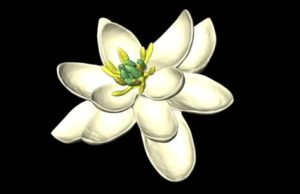 3D model of world's earliest flower
