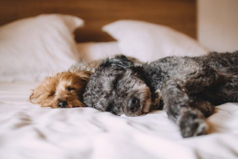 Let Your Dog Sleep In The Bedroom — But Not The Bed — For A Good Night's Sleep, Study Finds