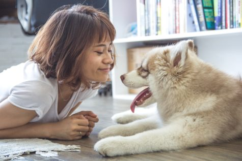 Wolves To Dogs: Study Finds Canine Affection For Humans Linked To Oxytocin Sensitivity