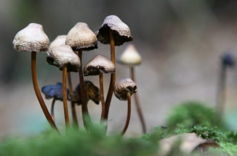 Study Finds Psychedelic Drugs May Reduce Criminal Behavior