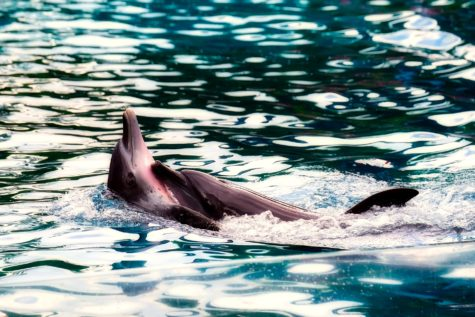 Study: Dolphins, Whales Travel In Social Groups, Exhibit Human-Like Cultural Qualities