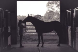Horse receiving kiss from owner