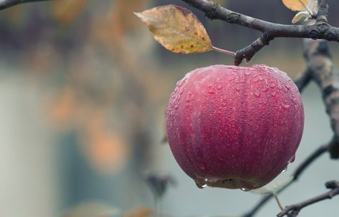 Do You Know Your Fruit? 4 In 10 Mistake An Apple For A Mango, Survey Finds
