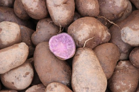 Eat Purple Potatoes To Cut Your Colon Cancer Risk, Study Finds