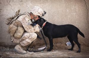 Soldier kissing a dog