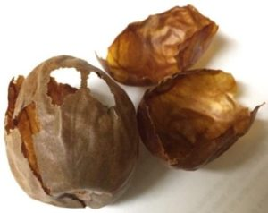 Avocado seed husks