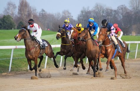 Horse Racing, Intense Training Can Be Fatal To Racehorses, Study Finds