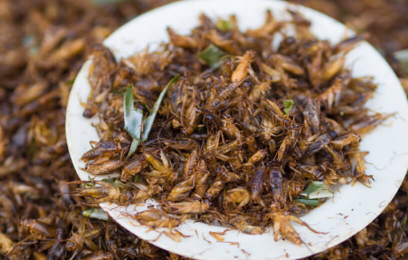 Cricket Juice Healthier Than Orange Juice? Many Insects Loaded With Antioxidants, Study Finds