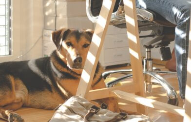 Dog laying down under chair