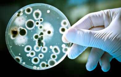 Person holding dish with bacteria in lab