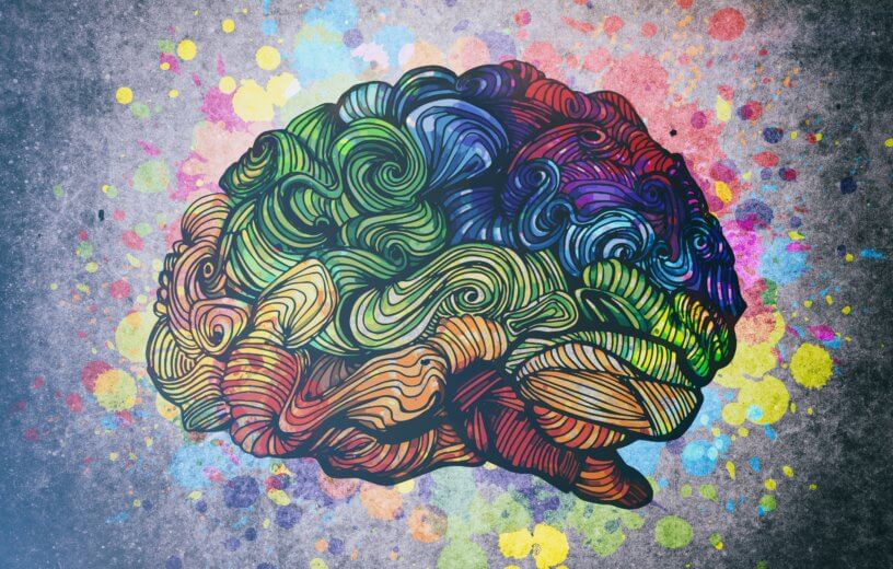 Study: Having A Bigger Brain Doesn't Mean You'll Have Better Memory