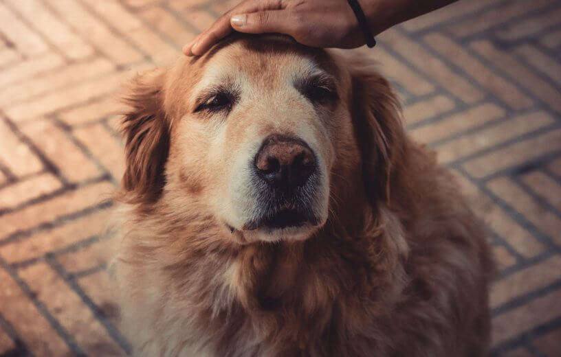 Pet owner petting a dog