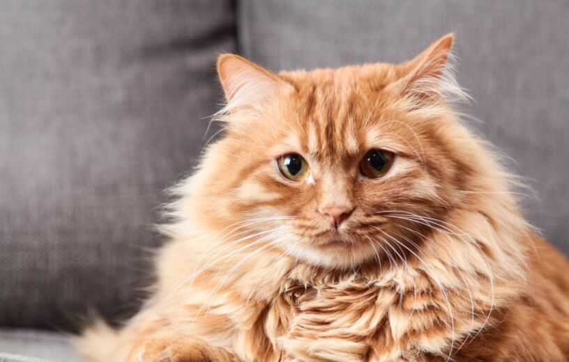 Fat Cats, Literally: New Study Finds Felines Are Getting