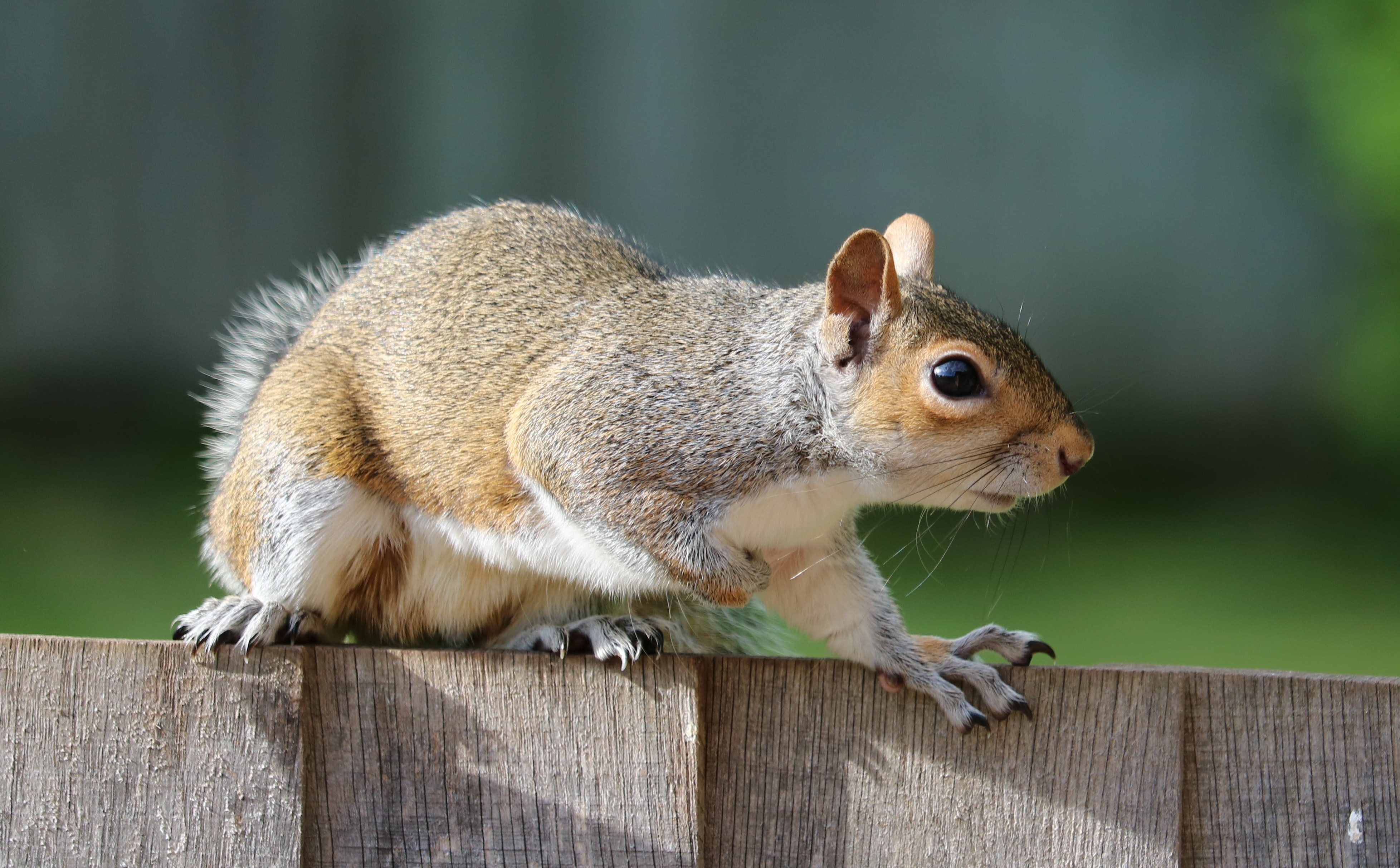 Study: Squirrels Eavesdrop On Birds To Stay Safe, Avoid