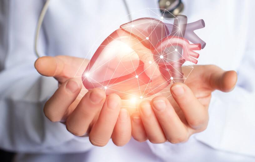 Doctor holding a human heart