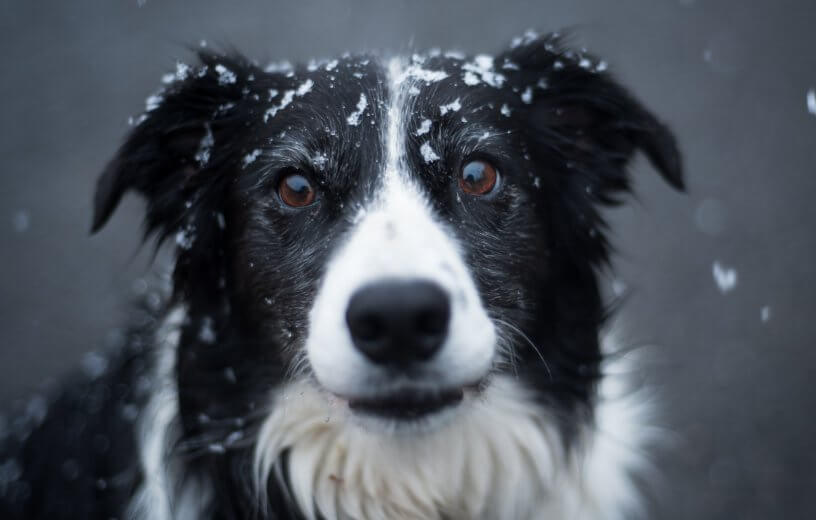Dog with snow on its head
