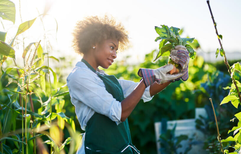 Woman gardening looking at vegetable