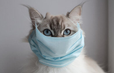 Coronavirus and cats: cat with mask on