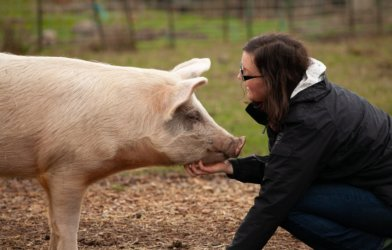Woman scratching a pig's chin