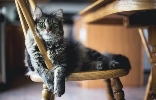 Cute cat sitting on a chair