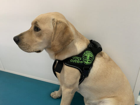 COVID-sniffing dog