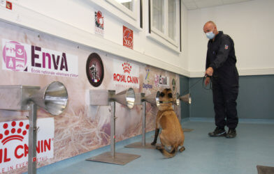 COVID-sniffing dogs