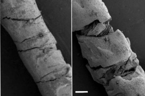Threads coated with electrically conducting carbon-based ink