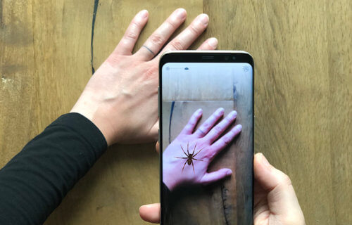 Hand Phobys spider